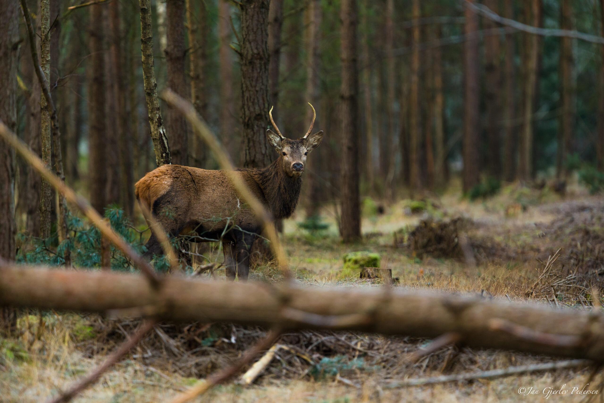 Fotojagt og natur i Halsnæs